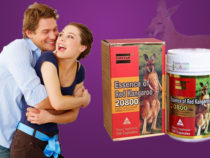 Thuốc kangaroo essence có công dụng gì?