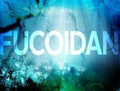 Thuốc Fucoidan của Nhật loại nào tốt?